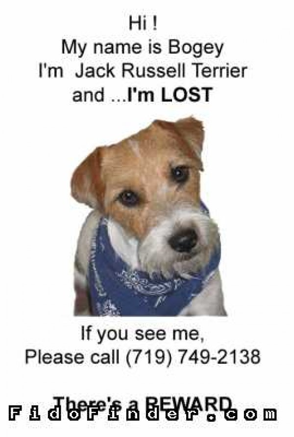 Safe Jack Russell Terrier in Colorado Springs, CO US