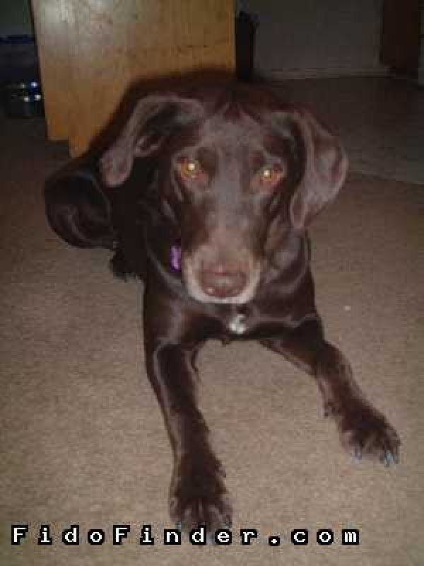 Safe Labrador Retriever in Laguna Hills, CA US