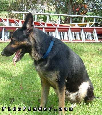 Safe German Shepherd Dog in Metairie, LA US