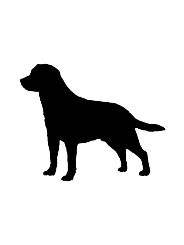Safe Mutt in Johns Island, SC US