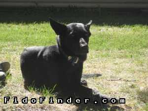Safe German Shepherd Dog in Saint Paul, MN US
