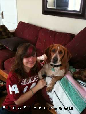 Safe Basset Hound in Tulsa, OK US
