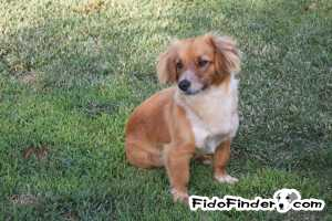 Safe Mutt in Norco, CA US