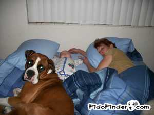 Safe Boxer in New Port Richey, FL US