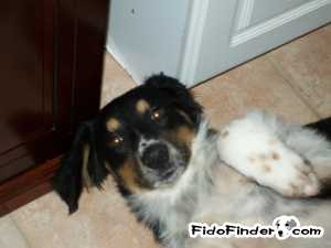 Safe Mutt in Miami, FL US