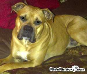 Safe Boxer in Calhoun, GA US
