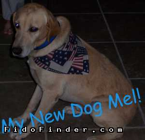 Safe Labrador Retriever in Austin, TX US
