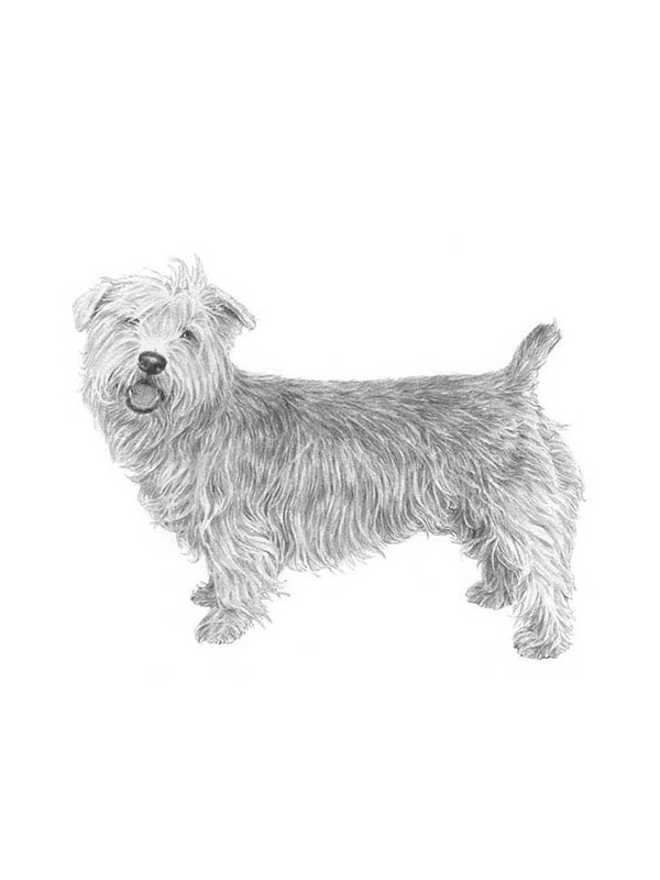 Safe Glen of Imaal Terrier in Winchester, CA US