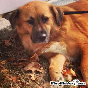 Safe Mutt in Levittown, NY US