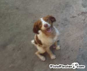 Safe Brittany in Houston, TX US