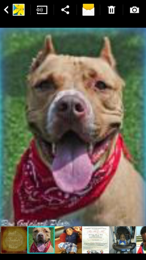 Safe Pit Bull in Decatur, GA US