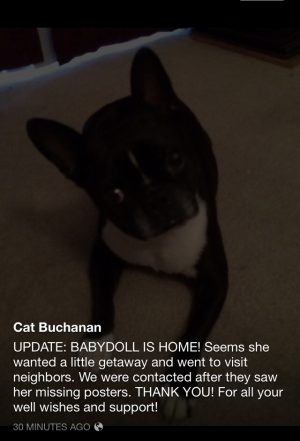 Safe Boston Terrier in Las Vegas, NV US