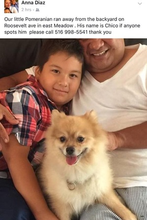 Safe Pomeranian in East Meadow, NY US