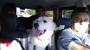 Safe Great Pyrenees in Norcross, GA US