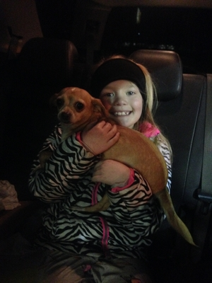 Safe Chihuahua in Canton, MI US
