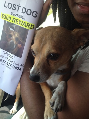 Safe Chihuahua in Houston, TX US