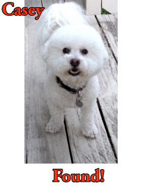 Safe Bichon Frise in Portland, OR US