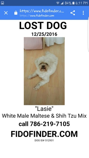 Safe Maltese in Miami, FL US
