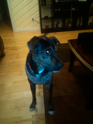 Safe Mutt in Marietta, GA US