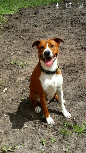 Safe Boxer in Kissimmee, FL US