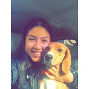 Safe Beagle in Fullerton, CA US