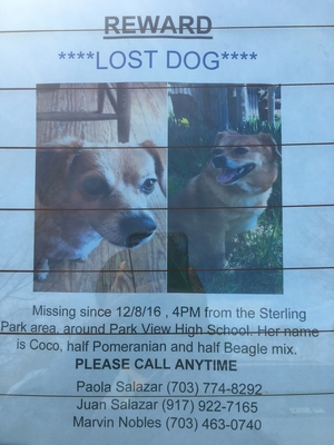 Lost Beagle in Sterling, VA US