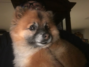 Safe Pomeranian in Mather, CA US