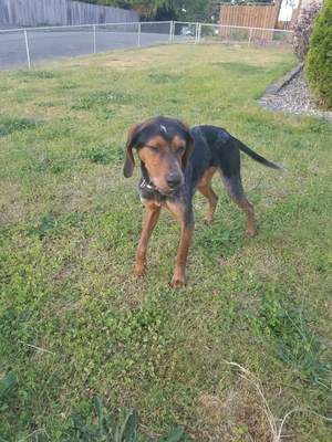 Safe Mutt in Tacoma, WA US