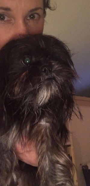Safe Shih Tzu in Coral Springs, FL US