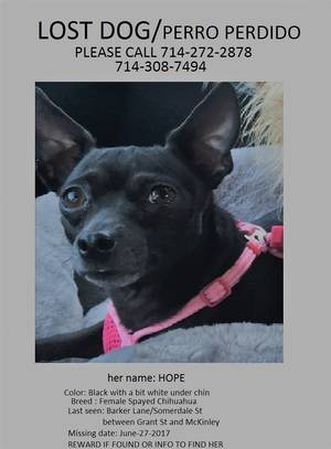 Safe Chihuahua in Corona, CA US