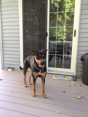 Found Dog in Baltimore, MD US