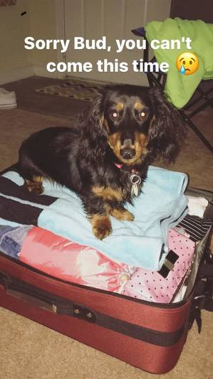 Lost Dachshund in Chester, VA US