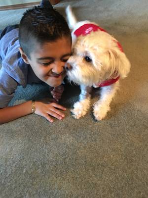 Safe Maltese in Everett, WA US