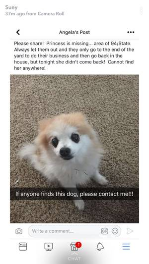 Safe Pomeranian in Kansas City, KS US