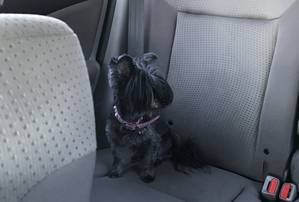 Found Shih Tzu in Philadelphia, PA US