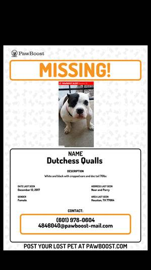 Lost Bull Terrier in Houston, TX US