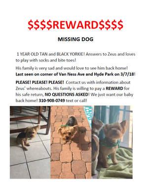 Lost Yorkshire Terrier in Los Angeles, CA US