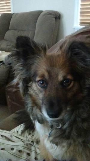 Safe Mutt in Annandale, VA US