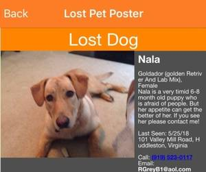 Lost Labrador Retriever in Huddleston, VA US