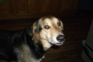 Safe Mutt in Parkton, MD US