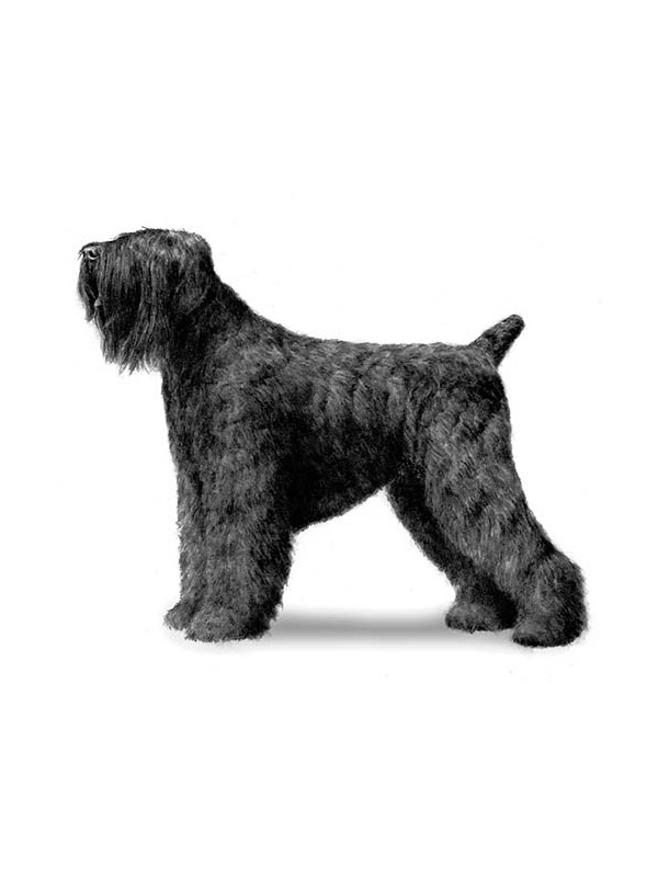Lost Black Russian Terrier in Kearny, NJ US