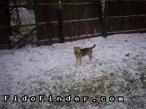 Safe Mutt in Fort Worth, TX US