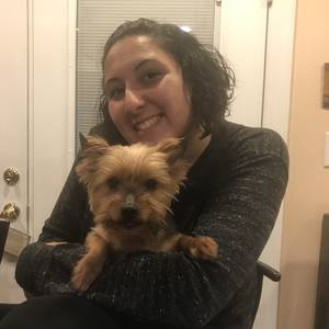 Lost Yorkshire Terrier in Virginia Beach, VA US
