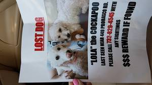 Lost Dog in Hightstown, NJ US