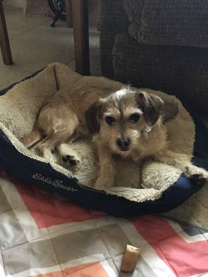 Safe Mutt in Loma Linda, CA US