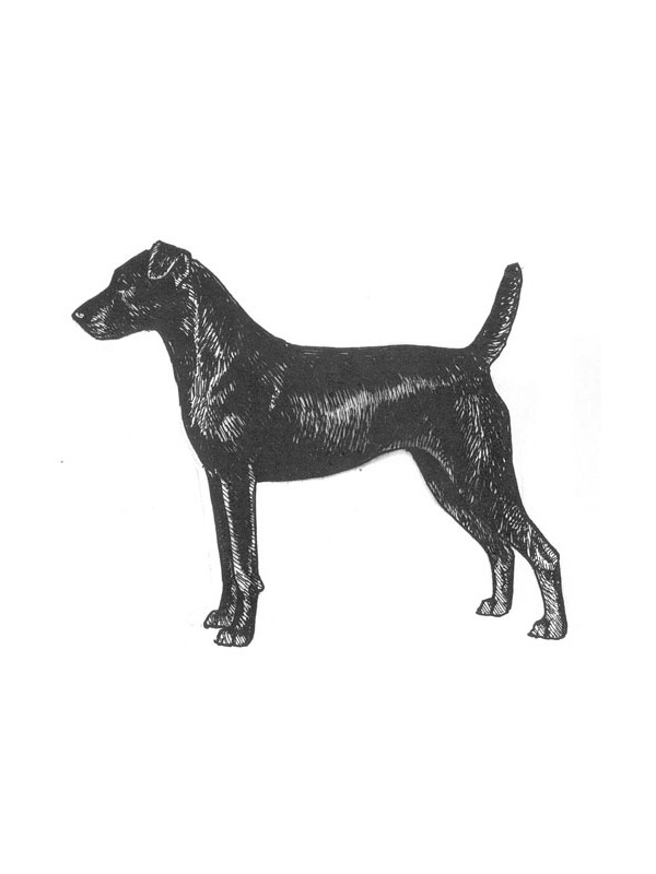 Lost Patterdale Terrier in Avondale, PA US