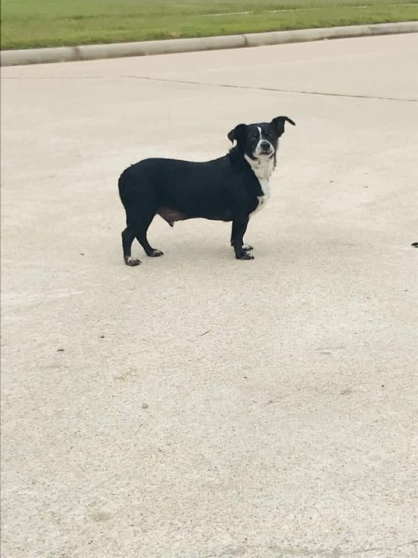 Found Mutt in Cypress, TX US