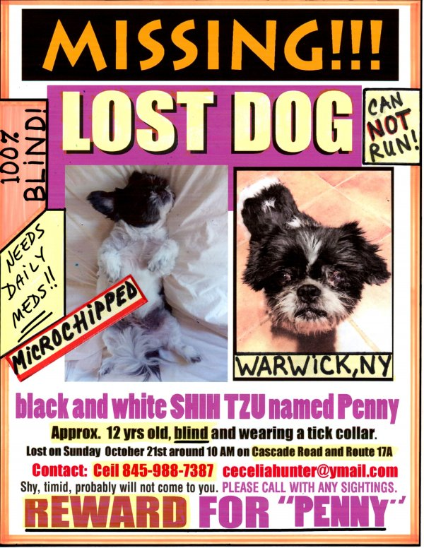 Lost Shih Tzu in Warwick, NY US
