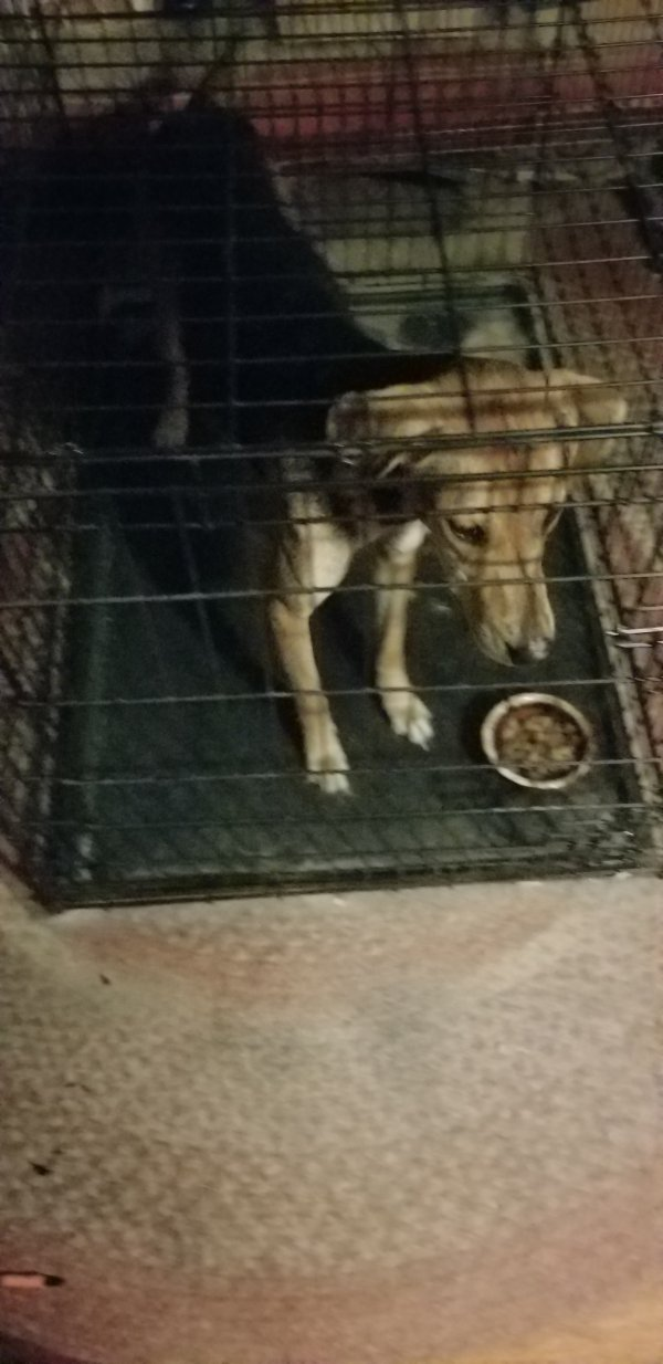 Found Dog in Bloomsburg, PA US