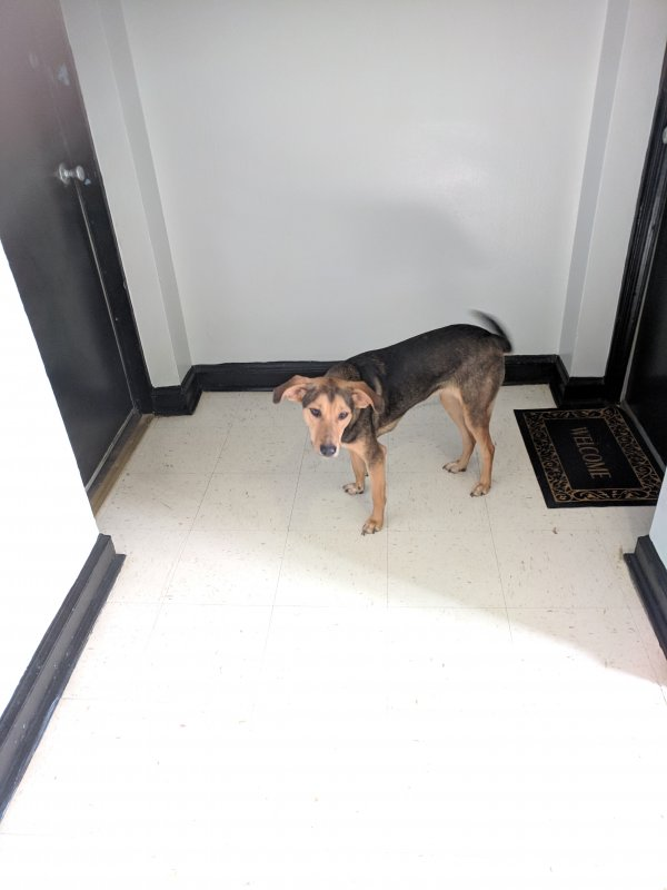 Safe Mutt in Brentwood, MD US
